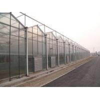Quality Venlo Greenhouse for sale