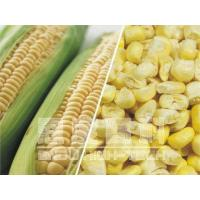 Quality Freeze-dried Corn for sale