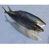 Quality Mackerel for sale