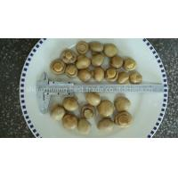 Buy cheap salted champignon from Wholesalers