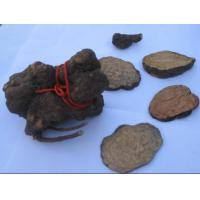 Buy cheap Tuber Fleeceflower from Wholesalers