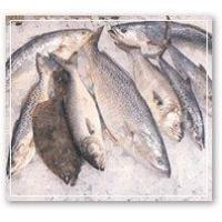 Quality Fresh Seafood for sale