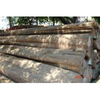 Quality Round logs / Rough squares for sale