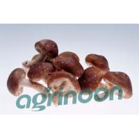 Buy cheap Fresh Shiitake Mushroom from wholesalers