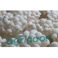 Buy cheap Fresh White Beech Mushroom from wholesalers