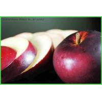 Quality Apple Series Apple Powder for sale