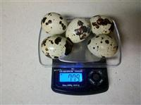 China Agriculture Quail Eggs on sale