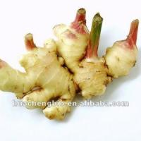 ISO&GMP Ginger extract powder(5%-20%Gingerol)
