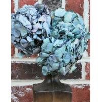 Quality Dried Hydrangea Flower Bunch - Blue Color for sale