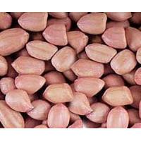 Buy cheap Ground Nuts 60-70 counts from Wholesalers