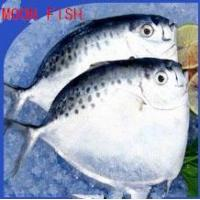 Quality Sea Caught Food Moonfish to Supply for sale