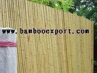 Quality MOSO Bamboo for sale