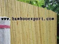 Buy MOSO Bamboo at wholesale prices