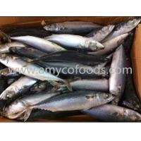 Quality Pacific mackerel WR for sale