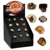 Buy cheap Fossil Magnets,72pcs per display from Wholesalers