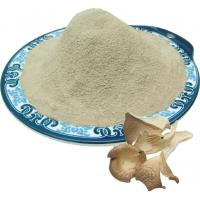 Quality Oyster mushroom powder for sale