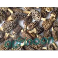 Quality Dried Morel for sale