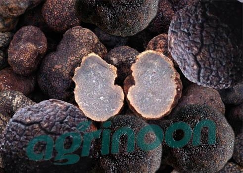 Buy Dried Truffle at wholesale prices