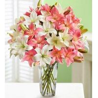 Quality Pink And White Lilies for sale