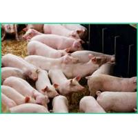 Quality Livestock Feed Ingredients/ Turkey Feed Ingredients Better Nutrition ZWE-2 for sale