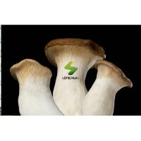 Quality Fresh foods Fresh King Oyster Mushroom for sale