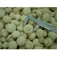 Quality Frozen Mushrooms for sale