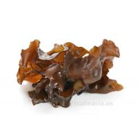 Quality Auricularia Polytricha Extract for sale