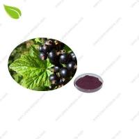 Quality Blackcurrant Juice Powde for sale
