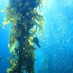 Quality Seaweed Extract for sale