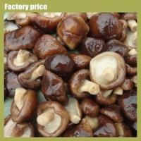 Quality Mushrooms & Truffles mushroom fungus for sale