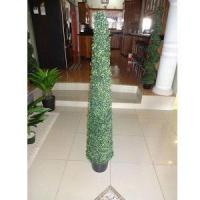 Quality Slim spiral Topiary for sale