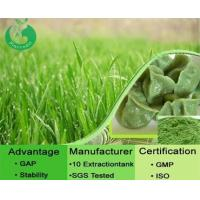 Quality Natural Barley Grass Powder for sale