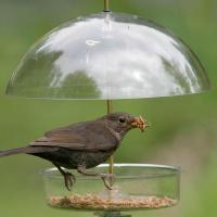 Buy cheap Domed Acrylic Bird Cage from wholesalers