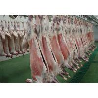 Quality Frozen Sheep Lamb carcass for sale