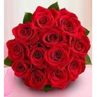 Buy cheap 1 Dozen Red Medium Stem Roses NO.1 send flower to australia sydn from wholesalers
