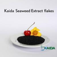 Quality Natural Super Quality Sea Kelp Source Dried Seaweed Extract Products for sale