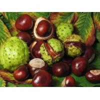 Quality Horse Chestnut Extract for sale