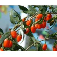 Buy cheap Organic Wolfberry Extract, wolfberry, lycium barbarum, goji berries benefits from wholesalers