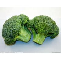 Buy cheap Broccoli Powder from wholesalers