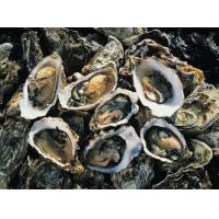 Quality Oyster powder could fight cancer for sale