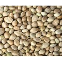 Quality hemp seed extract for sale