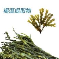 Quality Brown seaweed extract for sale