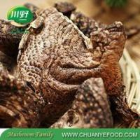 Quality 2016 Wild Dried Morel Mushrooms on Sale for sale