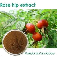 Quality Factory Rosehip Seed Oil,Rose Hips Seed Oil , Rose Hips Oil for sale