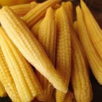 All About Cans of Big Yellow Corn Kernels for Sale
