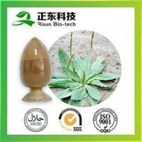 Quality Factory Supply 100% Natural Plantain Extract for sale