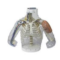 Quality JY/H-1014 Upper Arm Intramuscular Injection and Contrastive Simulator for sale