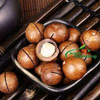 Buy cheap Macadamia Nuts Salted And Roasted Organic Shelled High Quality For Sale With Low Price from Wholesalers