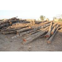 China Teak Wood Costarica Teak Logs on sale