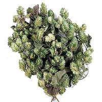 Buy cheap Preserved Decorative Hops - Green from Wholesalers